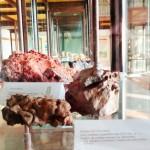 rio_nell_elba_museo_archeologico_visita_alderighi_lorella_2015_04_10_6