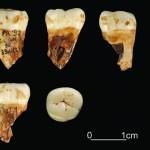 Un'immagine di Grotta Paglicci in Puglia (Foto del Dott. Stefano Ricci, del dipartimento di Scienze Fisiche, della Terra e dell'Ambiente dell'Università di Siena)