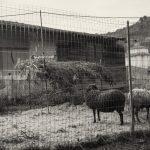 (Foto Stefano Dalle Luche )